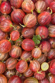 Red gooseberry close-up background, vertical — Stock Photo