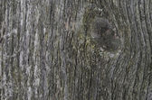 Gray texture of old wood — Stock Photo