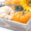 Pumpkins in wooden tray, close-up, selective focus — Stock Photo