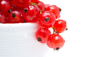 Bowl of red currant isolated, selective focus — Stock Photo