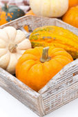 Various pumpkins in a wooden tray, close-up — Stock Photo