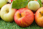 Assorted fresh garden apples on green grass, close-up — Stock Photo