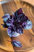 Purple basil in in a decorative bucket — Stock Photo