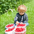 Happy toddler with red ripe raspberries on organic farm — Stock Photo