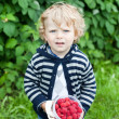 Blond baby boy with red ripe raspberries on organic farm — Stock Photo