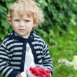 Cute baby boy with red ripe raspberries on organic farm — Stock Photo