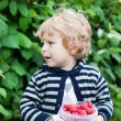 Adorable toddler with red ripe raspberries on organic farm — Stock Photo
