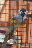 In the monkey cage at the zoo — Stock Photo