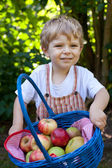 Adorable toddler with basket with apples — Stock Photo