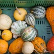 Foto Stock: Fresh healthy bio pumpkin on Germfarmer agricultural market