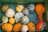 Fresh healthy bio pumpkin on German farmer agricultural market — 图库照片
