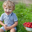 Adorable toddler with bowl strawberries on organic farm - Stock Photo