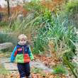 Cute toddler boy walking in autumn park — Stock Photo