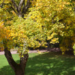 Yellow autumn trees in beautiful park — Stock Photo