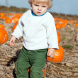 Little toddler boy on pumpkin field — Stock Photo #13868465