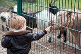 Menino da criança pequena, alimentando os animais no jardim zoológico — Foto Stock