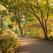 Stock Photo: Autumn Day in Central Park New York