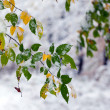 First snow in the forest in autumn — Stock Photo