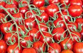 Fresh healthy bio tomatoes on farmer market — Stock Photo