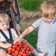 Two little brother boys with bowl strawberries — Stock Photo