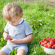 Adorable toddler with bowl strawberries on organic farm — Stock Photo #18763697