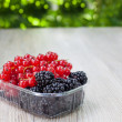 Bowl with different berries - red currant and blackberry - Stock Photo