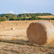 Hay bales on the field after harvest, Germany — Stock Photo #19464895