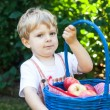 Little toddler boy holding big basket with fresh apples — Stock Photo #20119369