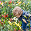 Little toddler boy on lily field in summer — Stock Photo #21621205
