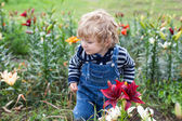 Little toddler boy on lily field in summer — Stock Photo