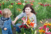 Little toddler boy and young woman on lily field in summer — Stock Photo