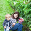 Young woman and little toddler boy picking raspberries - Foto Stock