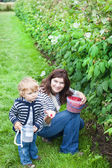 Young woman and little toddler boy picking raspberries — Stock Photo