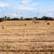 Hay bales on the field after harvest, Germany — Stock Photo
