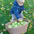 Royalty-Free Stock Photo: Little toddler boy with basket full of apples