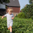Little boy two years on strawberry farm — Stock Photo #23825351