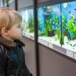 Little boy watches fishes in aquarium — Stock Photo