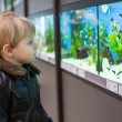 Stock Photo: Little boy watches fishes in aquarium