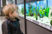 Little boy watches fishes in aquarium — Stok fotoğraf