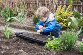 Little boy planting seeds in vegetable garden — Stock Photo