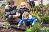 Two little boys and father planting seeds — Stock Photo