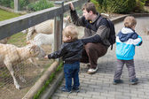 Two little boys and father feeding animals in zoo — Stock Photo