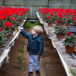Little toddler boy in greenhouse — Stock Photo #25579701