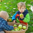Two little boys with apple basket — Stock Photo