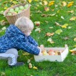 Little toddler boy with basket full of apples — Stock Photo