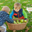 Two little boys with apple basket — Stock Photo #28416287