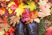Autumn colorful maple leaves in park — Stock Photo