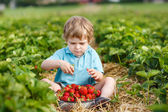 Little toddler boy on organic strawberry farm — Stock Photo