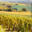 Vineyards in autumn in Germany region Rheingau — Stock Photo