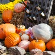 Decoration of fresh different pumpkin — Stock Photo